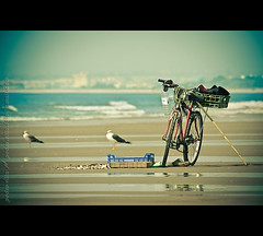 Twin Views #2: Bicycle Guardians (ISO_200) Tags: praia beach portugal bike bicycle iso200 sand dof areia seagull perspective bicicleta arena bici algarve bina bicicletas gaivota lvm montegordo vrsa vilarealdesantoantnio canonef70300mmf456isusm canoneos40d pedrovfernandes portugalmagico twinviews