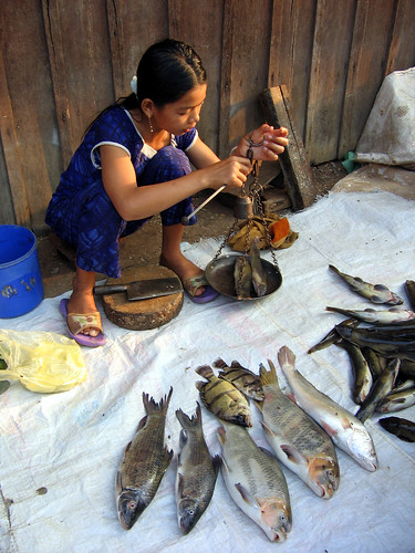 A girl selling fish in Stung Treng Market, Northern Cambodia. Photo by Edward H. Allison, 2006