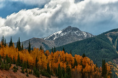 Aspens ablaze under cloudy skies in the Colorado Rockies... (toryporter (back... never catching up!)) Tags: travel autumn trees vacation sunlight mountains fall nature season colorado colorful ngc location workshop hdr potofgold naturesfinest 2011 photoworks coth supershot topshots abigfave nikond90 natureselegantshots coth5 mygearandme nikkor18200mmf3556lens mygearandmepremium mygearandmebronze mygearandmesilver mygearandmegold toryporter mygearandmeplatinum mygearandmediamond blinkagain damnblog bestofblinkwinners cothblog fallcolorincolorado
