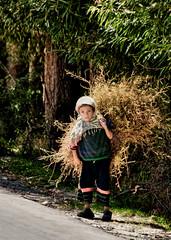 Summer Fodder. (Prabhu B Doss) Tags: summer portrait india girl grass work kid nikon cattle cut gal valley zanskar curious chores ladakh fodder kargil suru travelphotography jammuandkashmir 2011 bikeexpedition incredibleindia d80 prabhub prabhubdoss trespone zerommphotography 0mmphotography