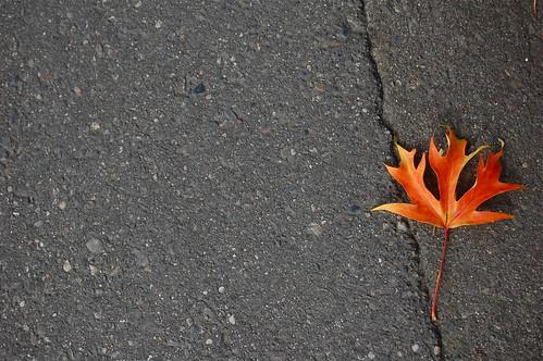 pavement :: 2