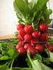 IMG_0595 (Haicopek Ng) Tags: vegetable ixus55 haicopek