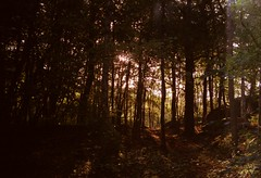 (genevive bjargardttir) Tags: autumn trees fall film analog forest 35mm gteborg october sweden iso400 gothenburg nordic sverige scandinavia agfavista slottsskogen zenitttl