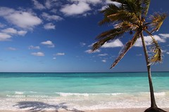 Cayo Coco, Palmtree - Explore (blauepics) Tags: travel blue sea seascape beach water clouds strand america palms landscape island mar reisen meer wasser republic country cuba nation central wolken playa republik insel communist explore coco latin land caribbean blau cuban amerika landschaft palmera isla americas cayo kuba the palmen karibik lateinamerika mittelamerika kubanische