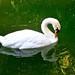swan at bel air