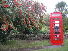 Red Telephone Box and Berries