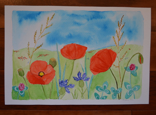 Wonderful poppies in a field from Agnieszka