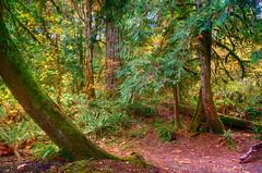 Molalla forest No. 1