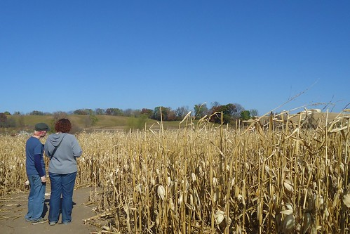 Corn Maze at Apple Jack Orchards