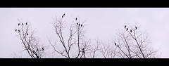friends forever (pair of rusty eyes and a camera) Tags: friends tree birds freedom fly high wings nikon branches mina together casual 24 forever barren hangout d90