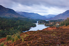 Glen Affric (Geoff France) Tags: scotland highlands reddeer scotlandslandscapes landscapelovers