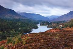 Glen Affric (Geoff France) Tags: scotland highlands reddeer scotlandslandscapes landscapelovers