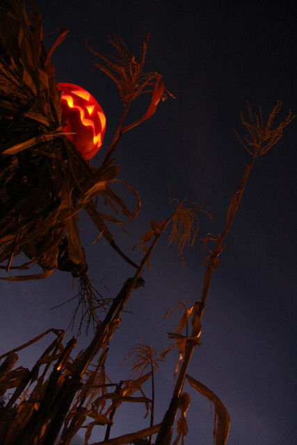 Spell - from spooky Halloween photography of a pumpkin head scarecrow in the snow - by Robert Aaron Wiley for Bindlegrim