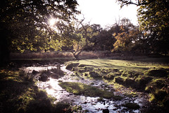 IMG_1306 (Lee Barguss) Tags: park wood bridge autumn trees light sunset sun tree fall water river woods stream ray leicestershire curves lee flowing newtown premier swithland bradgate linford glar barguss leeswim247