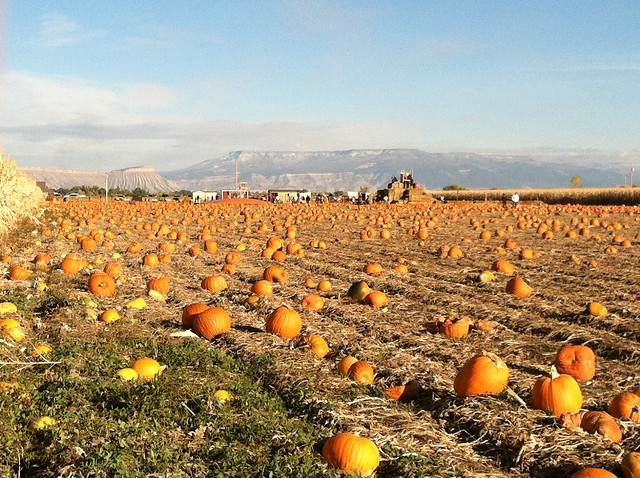 Studt's Pumpkin Patch and Corn Maze