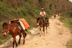 The area around Kyaukme, Myanmar / Burma (sensaos) Tags: travel people horse asia carriage state burma transport myanmar shan eastern birma azie famke azië palaung 2011 veenstra kyaukme sensaos