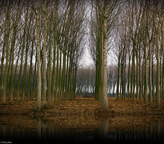 Autumn mood (Mem Foto) Tags: autumn trees flickr niceshot arbres mode fvg friuli udine wow1 wow2 bestcapturesaoi mem7672 marcobencivengaphotographer memfoto wwwmemfotocom wwwlaboratoriolacellulacom