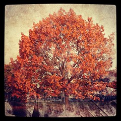 Tree #processed