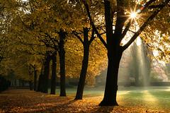 [フリー画像素材] 自然風景, 樹木, 紅葉・黄葉, 薄明光線, 風景 - ドイツ ID:201111052200