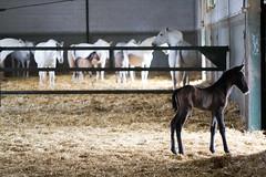 Descubriendo el mundo/Discovering the world (alfejarque) Tags: horse caballo mare colt potro yegua