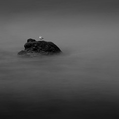 Sea Gull Rock (Boyd Hunt) Tags: longexposure sea bw bird rock scotland blackwhite seagull gull fineart single lone elgol