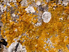 Licheni & Muschio (saro vet) Tags: muschio pietra sicilia licheni veterinarifotografi rosariomoscato oliympuse410