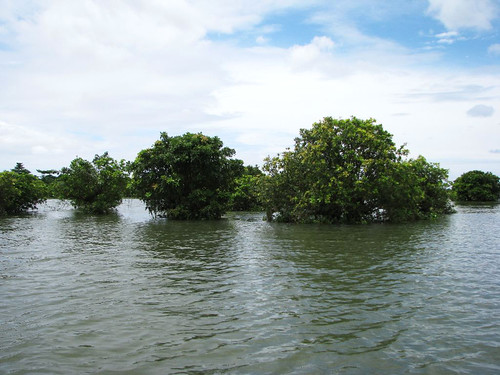 Hijal and Karoch trees in the haor provide an ecological niche, Sunamganj, Bangladesh. Photo by Balaram Mahalder, 2008