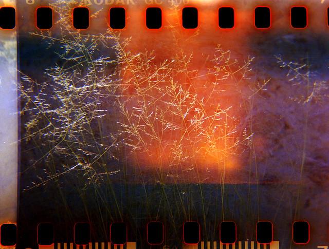 Wheat Universe