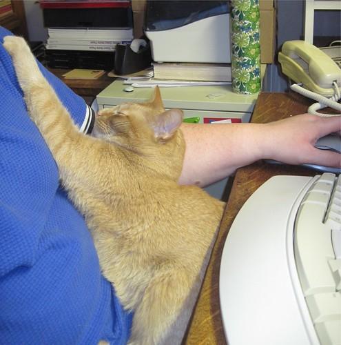 Cat Computing 2
