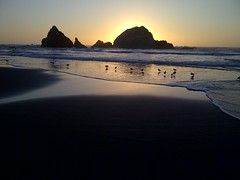Sutro beach (chet3) Tags: california sunset beach birds rock san francisco seal sutro worldtrekker