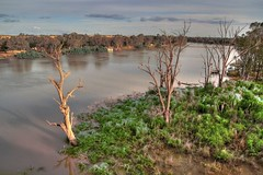 Murray ghosts (aartfielder) Tags: trees sunset plant colour nature canon river landscape hdr murrayriver deadtrees