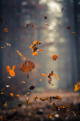 Throwing leaves (koeb) Tags: autumn leaves bokeh herbst blätter