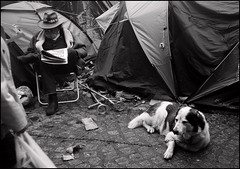 a man and a dog in a city (anjan58) Tags: dog london protest encampment robertcapa occupylondon