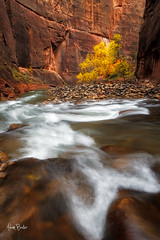 ever onward ([Adam Baker]) Tags: park longexposure autumn trees canon river utah hiking canyon virgin national zion narrows 1740l adambaker 5dii