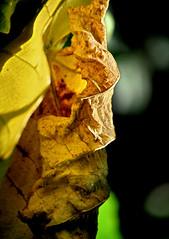 la vecchia missionaria - the old missionary (sharkoman) Tags: pareidolia occhio velo bocca naso perplesso testa volto rughe trequarti contrito sharkoman