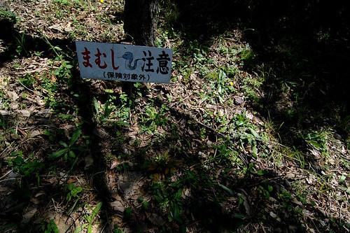 mamushi pit viper