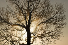Afterglow (diesmali) Tags: winter light tree sweden sverige stergtland canoneos7d
