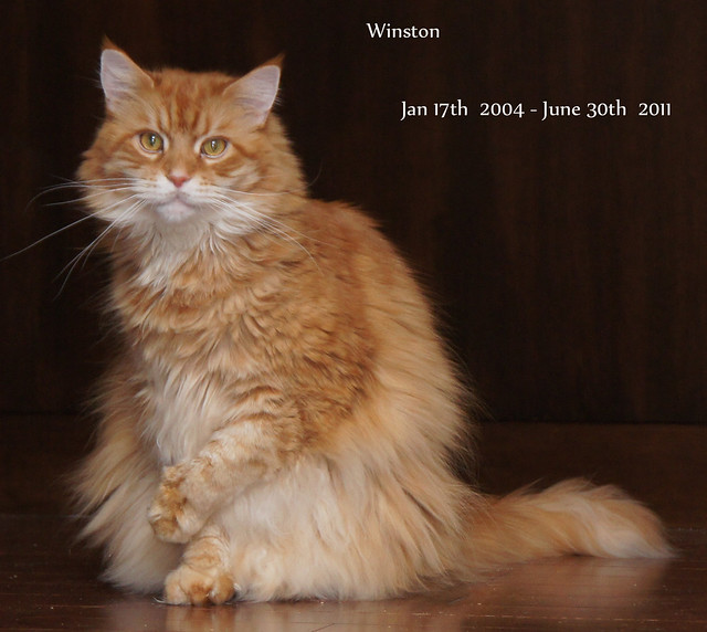 Winston Love