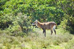 "PhotoFly Travel Club Kenya Safari 2011! • <a style=""font-size:0.8em;"" href=""http://www.flickr.com/photos/56154910@N05/5892998920/"" target=""_blank"">View on Flickr</a>"