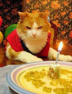 cat_birthday_parties_15