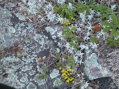 TrentSevern2011~4095 (James D. Hay) Tags: flowers houseboat canals vacations 2011 trentsevern lovesicklocks wolfislandontario