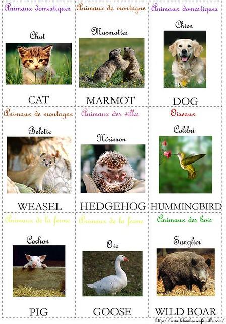 cartes anglais animaux 4 AAAAAAAAAAAAAAAAAAAAAAA
