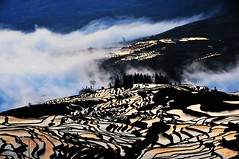 Terrace pattern  (Melinda ^..^) Tags: china morning nature weather fog pattern terrace hill mel melinda yunnan yuanyang        chanmelmel
