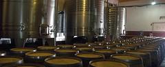 Salta: Se constituye un Consorcio de Exportación de vinos