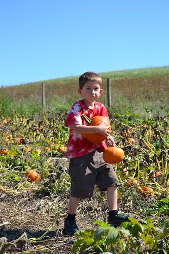 john gets a pumpkin for ruby by ellajohn