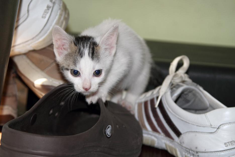 100111_kittens02