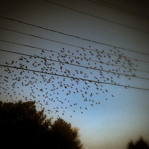 the birds by kim/ber