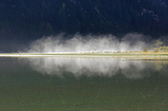Fog at Lago di Landro (dorena-wm) Tags: italien light italy mist lake reflection water fog see licht bush wasser spiegelung busch reflektion dunst nebenl landro drrensee lagodilandro dorenawm