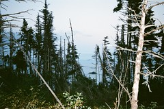 deadtrees (klausfish) Tags: ocean trees film 35mm newfoundland view hazy atlanticocean expiredfilm deadtrees bearscove