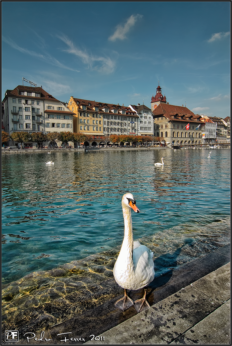 Suiza - Pueblos con encanto - Lucerna - Cisnes